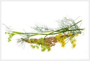 Fennel flower and seeds