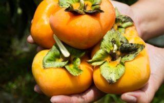 Japanese national fruit
