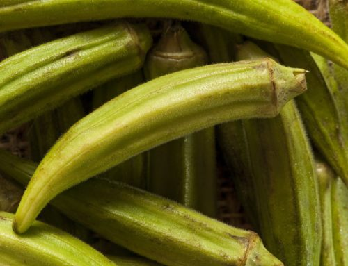 Healing Properties of Okra