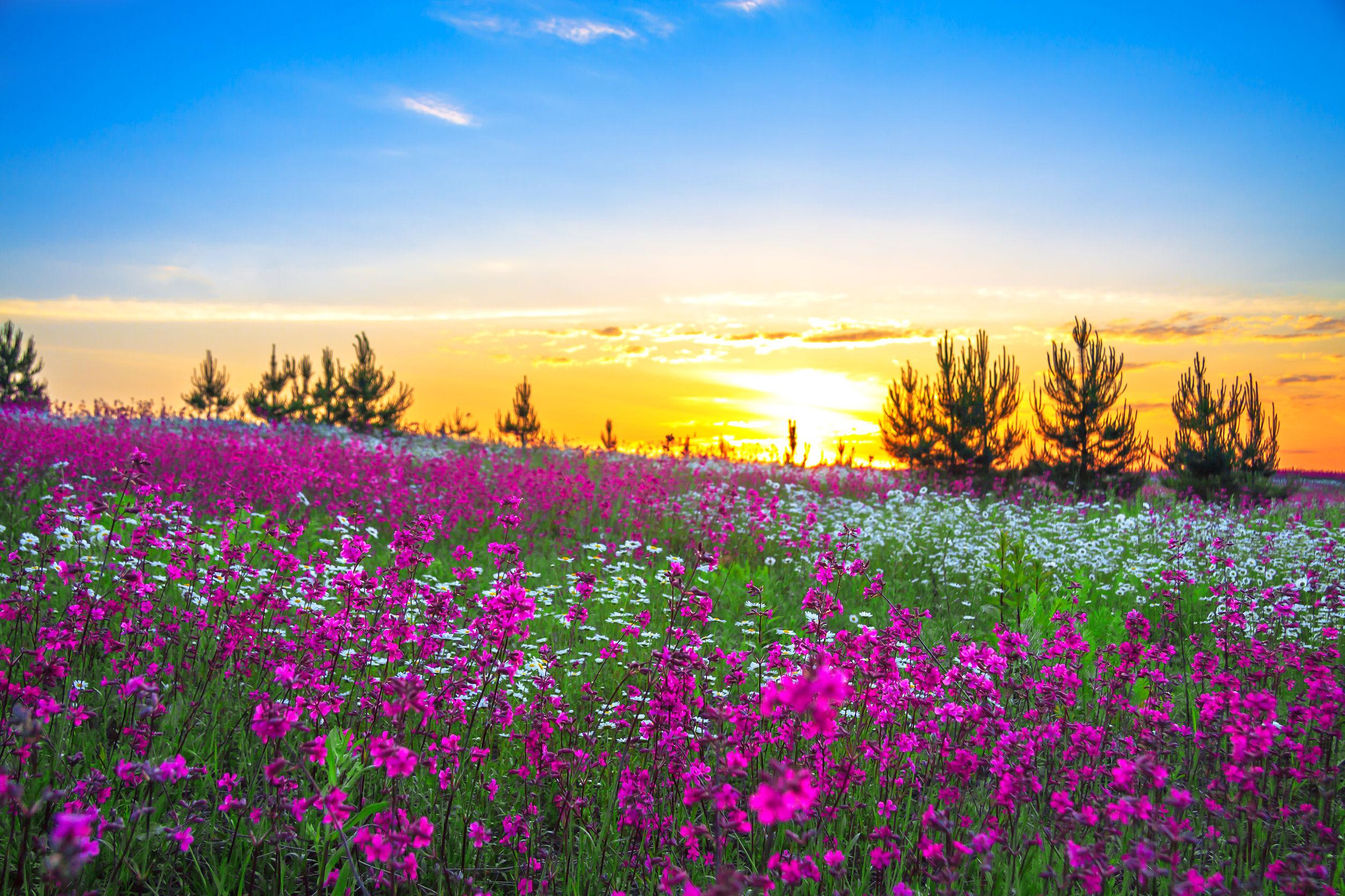 beautiful fields of flower