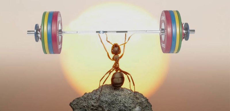 ant and weights