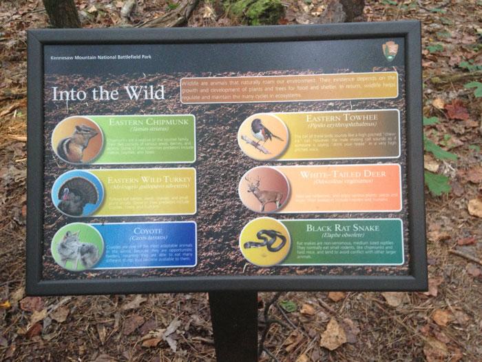 The spiritual lessons wild life can teach us