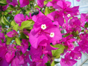 skin care like caring for flowers